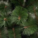 bor-zelena-2-1.jpg